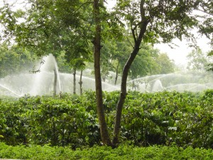 Irrigation in coffee fields in Vietnam
