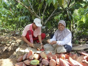 Male and female UTZ farmers with cocoa pods in Indonesia
