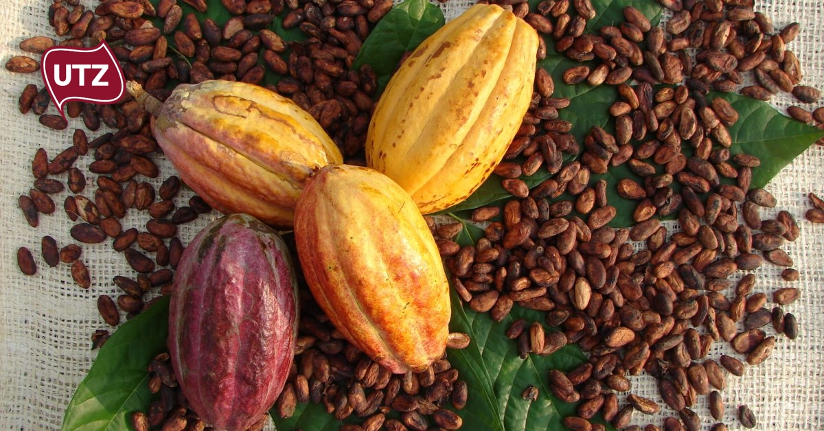 UTZ Same UTZ cocoa, different price – why isn't the cost of