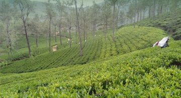 UTZ certified tea estate Mathurata Plantations in Sri Lanka