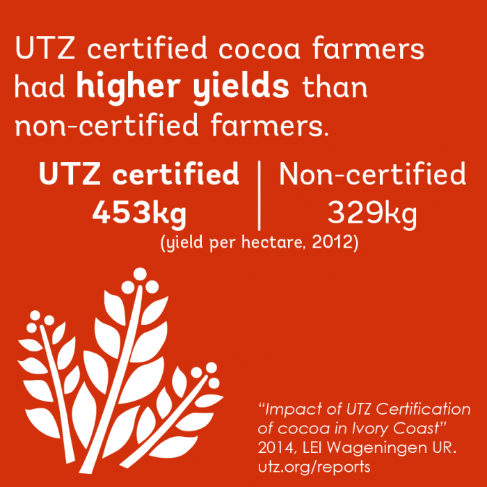 Impact fact on cocoa in Cote D'Ivoire