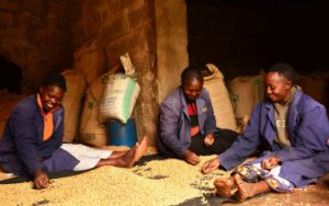 Workers at Fairview coffee estate in Kenya
