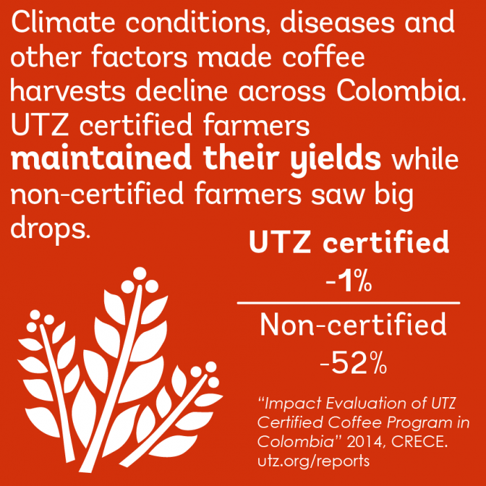 Impact on better crop in the coffee sector in colombia