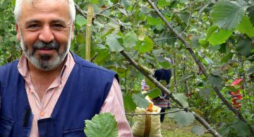 Hazelnut farmer Orhan Güler Turkey in his orchard